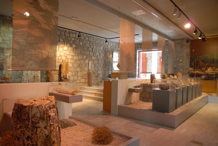 Μουσείο Φυσικής Ιστορίας Απολιθωμένου Δάσους - debbiestravel